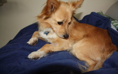 Richie – ADOPTED!